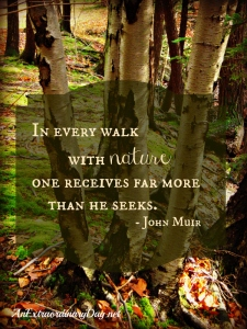 anextrarodinaryday-net-birches-in-the-woods-john-muir-quote-about-nature