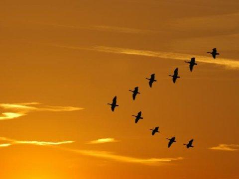 migratorybirds