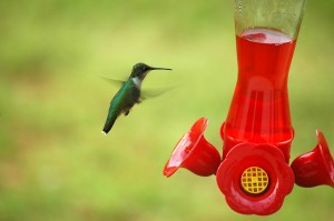 hummingbird-at-a-feeder-1